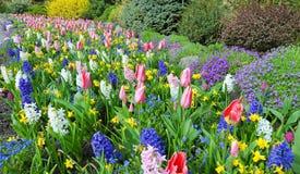 Κρεβάτια λουλουδιών την άνοιξη με τα πολύβλαστα χρώματα, Βικτώρια, Καναδάς Στοκ εικόνα με δικαίωμα ελεύθερης χρήσης