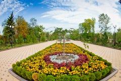 Κρεβάτι λουλουδιών με τα tagetes στο δημόσιο κήπο στοκ εικόνες
