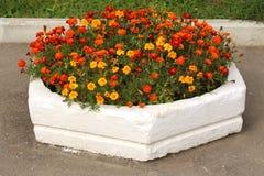 Κρεβάτι λουλουδιών με marigold Στοκ φωτογραφία με δικαίωμα ελεύθερης χρήσης