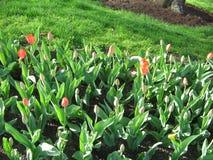 Κρεβάτι λουλουδιών, δημόσιος κήπος της Βοστώνης, Βοστώνη, Μασαχουσέτη, ΗΠΑ Στοκ Εικόνες