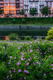 Κρεβάτι λουλουδιών κοντά στον ποταμό στο Στρασβούργο Στοκ φωτογραφία με δικαίωμα ελεύθερης χρήσης