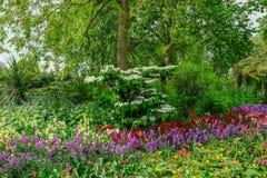 Κρεβάτι λουλουδιών με την όμορφη επίδειξη λουλουδιών άνοιξη Στοκ Εικόνα
