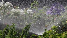 Κρεβάτι λουλουδιών ποτίσματος ψεκασμού άρδευσης κήπων απόθεμα βίντεο