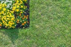 Κρεβάτι λουλουδιών τα πορτοκαλιά, κίτρινα & άσπρα λουλούδια που περιβάλλονται με από το gre Στοκ Εικόνες