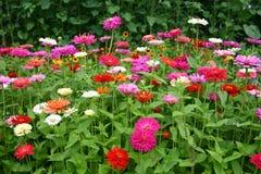 Κρεβάτι λουλουδιών Στοκ εικόνες με δικαίωμα ελεύθερης χρήσης