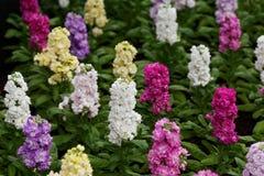 Κρεβάτι των λουλουδιών Στοκ Εικόνες