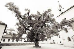 Κρεμάστε χαλαρά Στοκ φωτογραφία με δικαίωμα ελεύθερης χρήσης