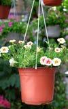 Κρεμασμένα σε δοχείο λουλούδια που ωραιοποιούν το περιβάλλον στοκ φωτογραφίες
