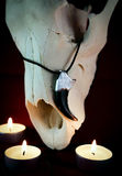Κρεμαστό κόσμημα φιαγμένο από νύχια αρκούδων στο κρανίο ενός ζώου που περιβάλλεται Στοκ Εικόνες