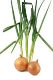 Κρεμμύδια και scallions Στοκ Εικόνες