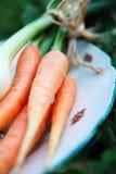 κρεμμύδια καρότων στοκ εικόνες