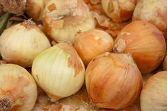 κρεμμύδια οργανικά Στοκ Φωτογραφία