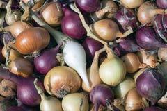 Κρεμμύδια στην αγορά στοκ φωτογραφίες με δικαίωμα ελεύθερης χρήσης