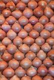 κρεμμύδια στοκ φωτογραφίες με δικαίωμα ελεύθερης χρήσης