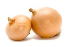 κρεμμύδι δύο βολβών στοκ φωτογραφία