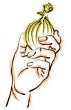 κρεμμύδι εκμετάλλευση&sigm Ελεύθερη απεικόνιση δικαιώματος