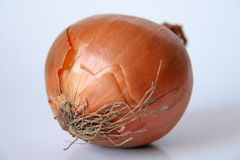 Κρεμμύδι που απομονώνεται στοκ εικόνες με δικαίωμα ελεύθερης χρήσης