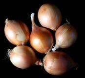 κρεμμύδι Στοκ Φωτογραφία