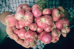 κρεμμύδια Στοκ Φωτογραφίες