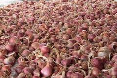 Κρεμμύδι κρεμμυδιών, υπόβαθρο Στοκ Εικόνες