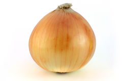 κρεμμύδι ώριμο Στοκ Φωτογραφία