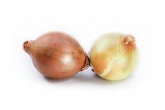 Κρεμμύδι Στοκ Εικόνα
