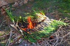 Κρεμμύδι (calçotada) Στοκ φωτογραφίες με δικαίωμα ελεύθερης χρήσης