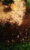 κρεμώδης αυξήθηκε Στοκ εικόνες με δικαίωμα ελεύθερης χρήσης