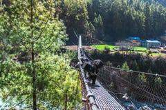Κρεμώντας γέφυρα αναστολής στο Νεπάλ Στοκ φωτογραφίες με δικαίωμα ελεύθερης χρήσης