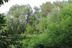 Κρεμώντας γέφυρα, τοπίο, δέντρα, φύση στοκ φωτογραφία