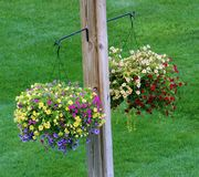 Κρεμώντας διακόσμηση λουλουδιών το καλοκαίρι Στοκ φωτογραφίες με δικαίωμα ελεύθερης χρήσης