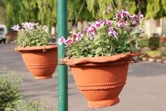 κρεμώντας δοχεία λουλ&omicr στοκ εικόνες με δικαίωμα ελεύθερης χρήσης