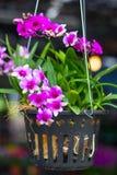 Κρεμώντας δοχείο λουλουδιών στο πάρκο, Ταϊλάνδη Στοκ φωτογραφία με δικαίωμα ελεύθερης χρήσης