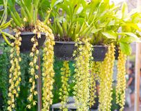 Κρεμώντας δοχείο λουλουδιών στο πάρκο Στοκ Εικόνες
