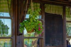 Κρεμώντας δοχείο λουλουδιών Στοκ εικόνα με δικαίωμα ελεύθερης χρήσης