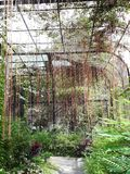 Κρεμώντας κήπος αμπέλων Στοκ εικόνα με δικαίωμα ελεύθερης χρήσης