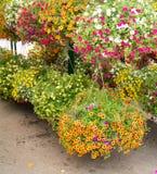 Κρεμώντας καλάθια λουλουδιών Στοκ Εικόνες