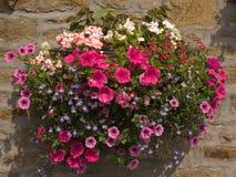 Κρεμώντας καλάθι λουλουδιών στον τοίχο εξοχικών σπιτιών πετρών στοκ εικόνα