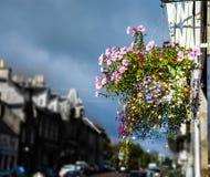 Κρεμώντας καλάθι με το ροζ, το κόκκινο, τη βιολέτα και χρωματισμένα τα ροδανιλίνη λουλούδια στοκ φωτογραφία με δικαίωμα ελεύθερης χρήσης
