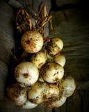 κρεμώντας κρεμμύδια Στοκ φωτογραφία με δικαίωμα ελεύθερης χρήσης