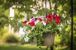 Κρεμώντας λουλούδια μπροστά από το σπίτι Στοκ Εικόνα