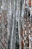 κρεμώντας παγάκια Στοκ εικόνες με δικαίωμα ελεύθερης χρήσης