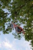 Κρεμώντας ρόδινα γυαλιά ηλίου Στοκ Φωτογραφία