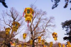 Κρεμώντας το κινεζικό φανάρι στο πάρκο που γιορτάζει υπαίθρια το νέο έτος Στοκ Φωτογραφία