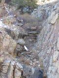 Κριοί στους βράχους στοκ εικόνες