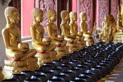 Κριοί του Βούδα Στοκ Εικόνες
