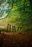 Κροατία - πάρκο φύσης Papuk - δασική πορεία στοκ εικόνα με δικαίωμα ελεύθερης χρήσης