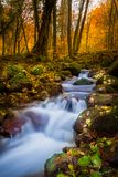 Κροατία - πάρκο φύσης Papuk - δασικός κολπίσκος στοκ εικόνες