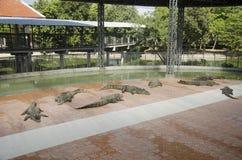 Κροκόδειλοι που κοιμούνται και που στηρίζονται στο πάρκο του PU Bueng Boraphet Στοκ φωτογραφία με δικαίωμα ελεύθερης χρήσης