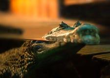 Κροκόδειλος που επιπλέει στην επιφάνεια νερού στοκ εικόνα με δικαίωμα ελεύθερης χρήσης